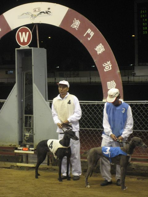 Dogs paraded before the race